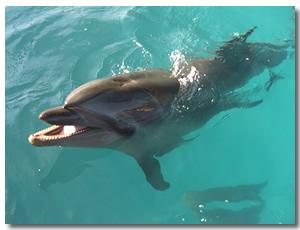 Cabo San Lucas Dolphin swim